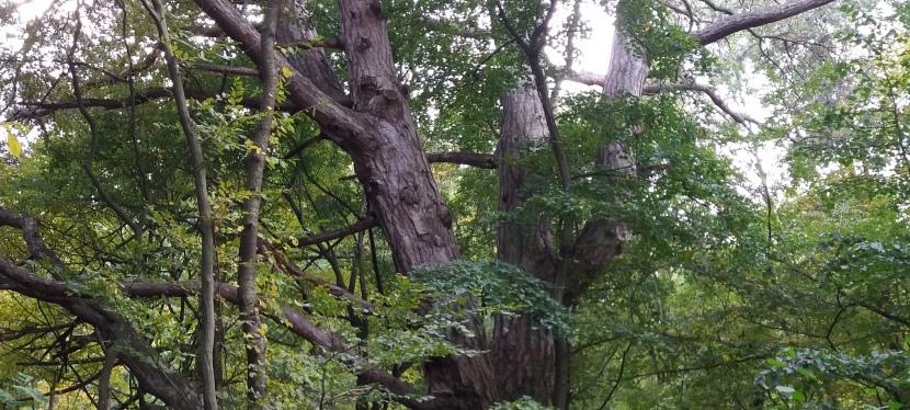 Ein Baum wie einLeben