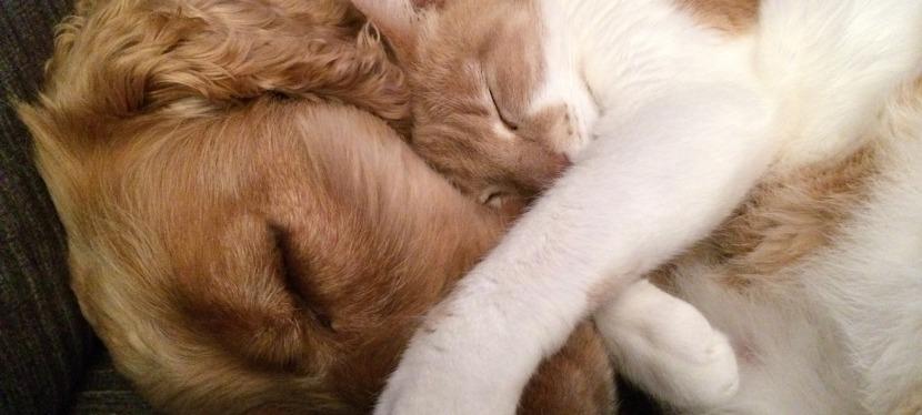 Zwei wie Hund und Katze…