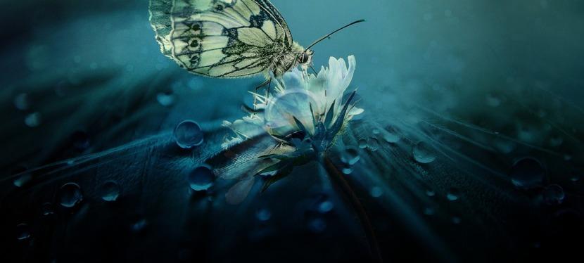 Alles begann mit dem Flügelschlag eines Schmetterlings…